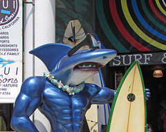 Surf Shop Shark