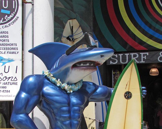 Surf Shop Shark