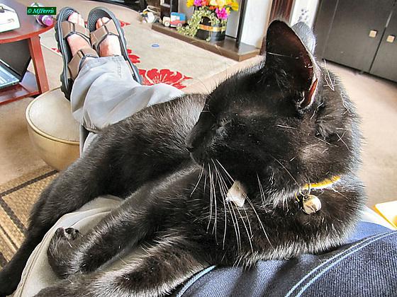 47 Sooty relaxing