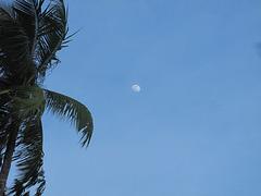 taga luno super palmoj 502