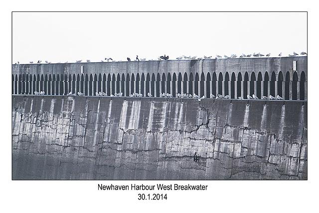Newhaven West Breakwater - 30.1.2014