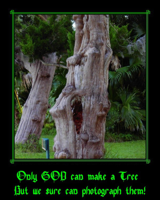 Only GOD can make a Tree
