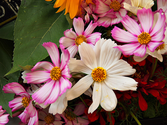Sommerblumen ~
