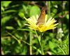 jardin aux papillons Digne