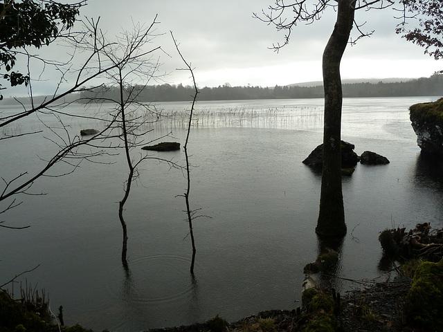 Lough Cutra - Jan 2013