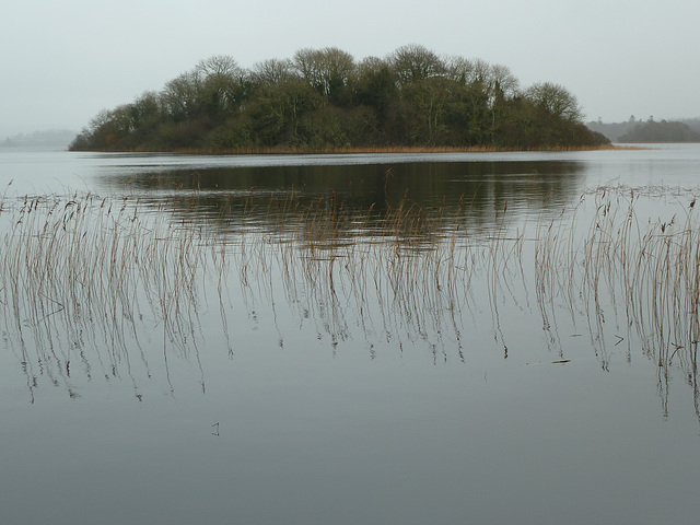 Lough Cutra - Jan 2013