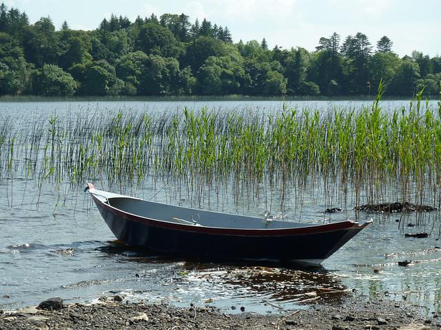 Lough Cutra - July 2013