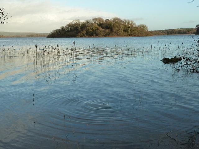Lough Cutra - Dec 2013