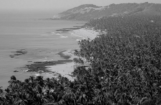 Coconut Grove.