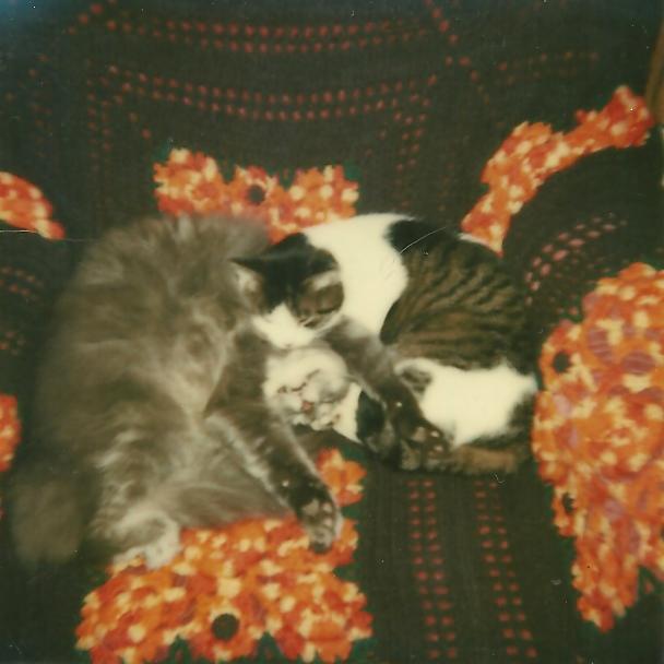Felines In Love
