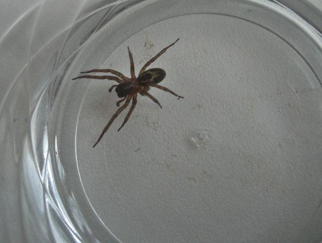 Kitchen visitor