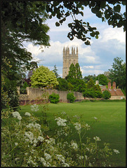 Magdalen from the meadow