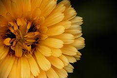 Patio Life: Yellowness