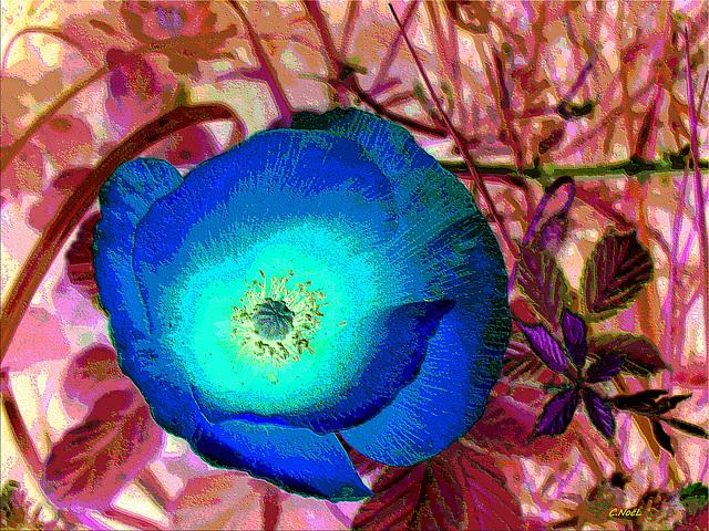 Blue variation !