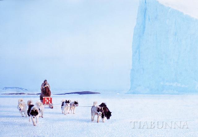 Dog team passing iceberg