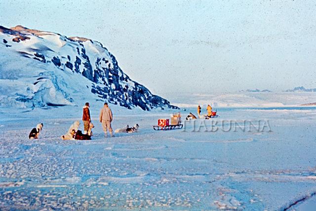 Dog teams on the sea ice
