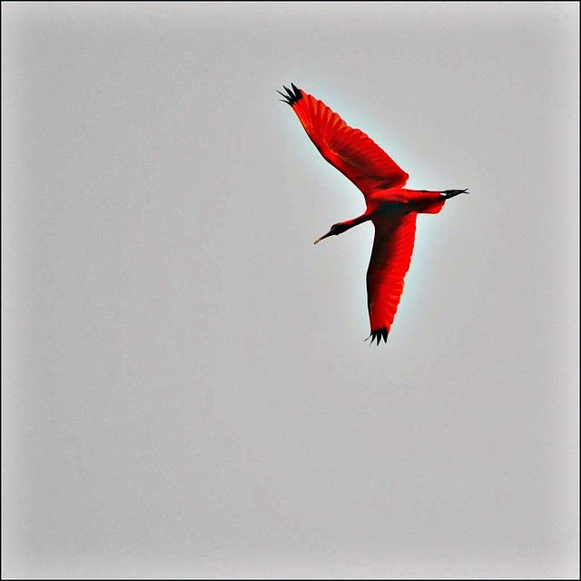 Birds flight.