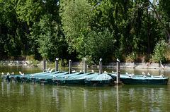 Gulls on boats