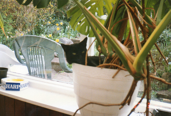 Spot chilling in the pot