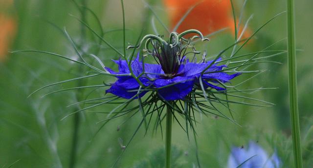 je ne connais pas le nom de la fleur ,