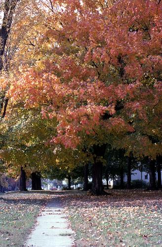 Fall Tree 1979