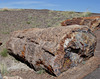 Petrified Forest National Park 2308