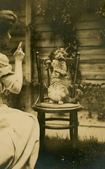 Scolding the Cat?