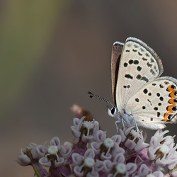 """205/365: """"Butterflies are self-propelled flowers."""" ~ Robert A. Heinlein"""
