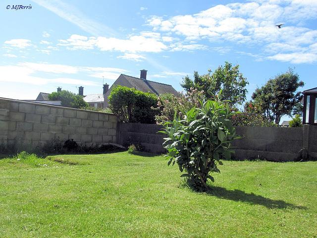 01 garden