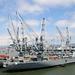 USS Hornet Neighbors (2941)