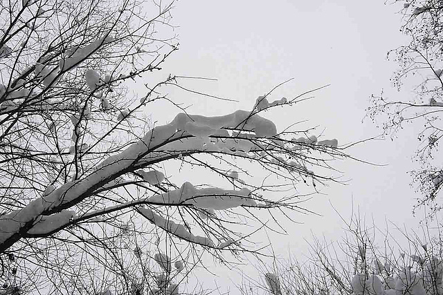 Branches & Snow