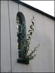Jericho houseplant