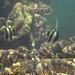 Schnorcheln bei Toto Island