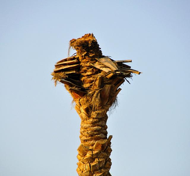 ...eine Palme