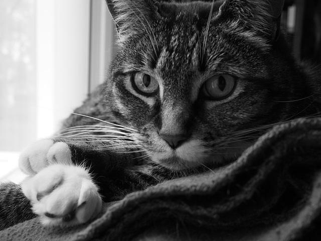 Cat in His Window