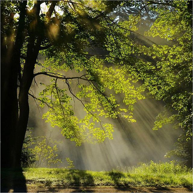 Light fall.