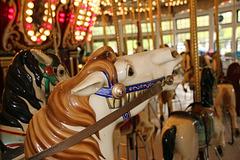 Carousel horse (Explored)