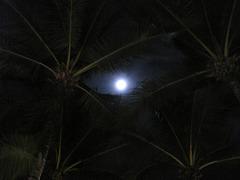 luno tra palmoj 200
