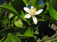 flower 0408 004