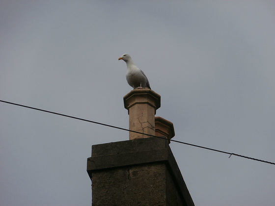 Mr Seagull is back on his perch