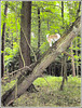 Tree Terrier!