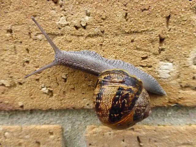 Un Escargot sur Un Mur - 8 May 2014