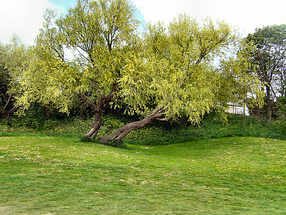 01 tree
