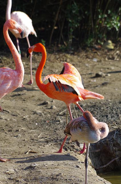 Parc aux oiseaux - Villars les Dombes