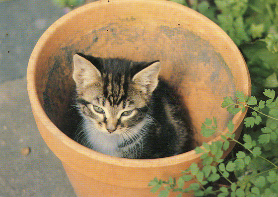 Little kitty sitting in a hollow pot