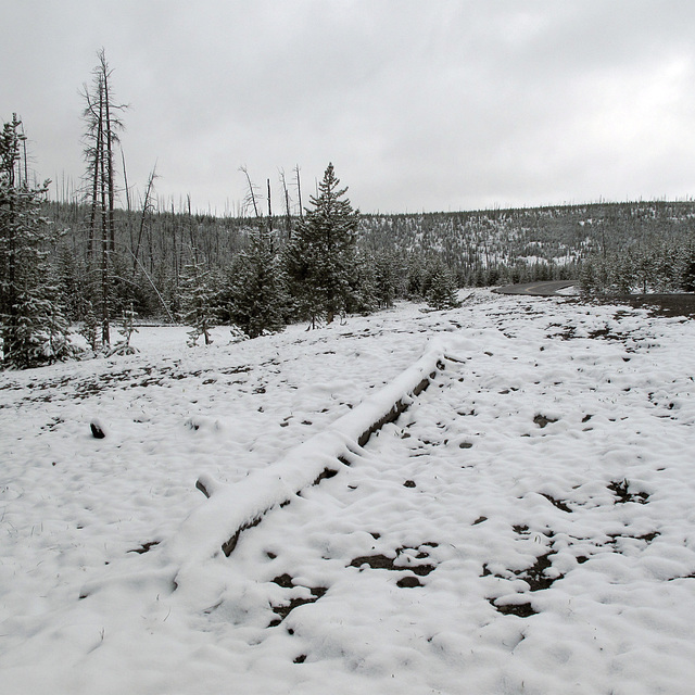 One of the gloppy wet snows that draw tourists to Yellowstone Nat'l Park in late-May because they don't want winter to end and they dread the arrival of springtime.