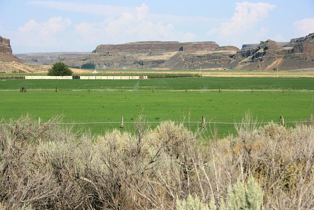 Irrigated farmland, Moses Coulee, Washington state, USA