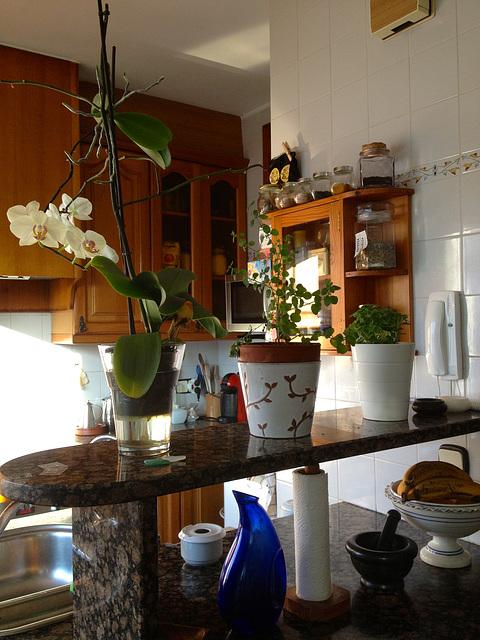 orquídea casolana 2