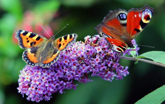 Butterflies 038  Copy 2 Explore