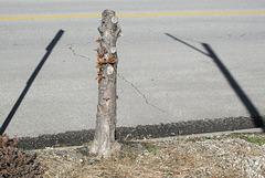 Cutter victim.  Its wide-open sky is a gritty street.